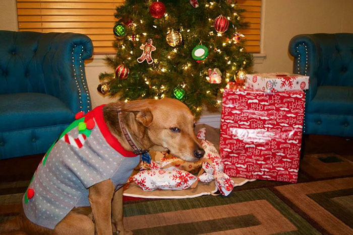perro odia la navidad