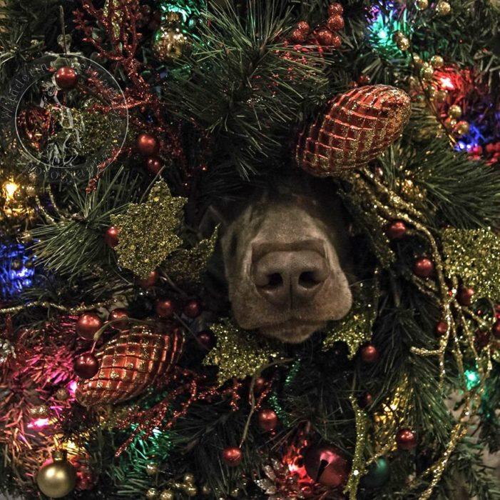 perro metido en el árbol de navidad
