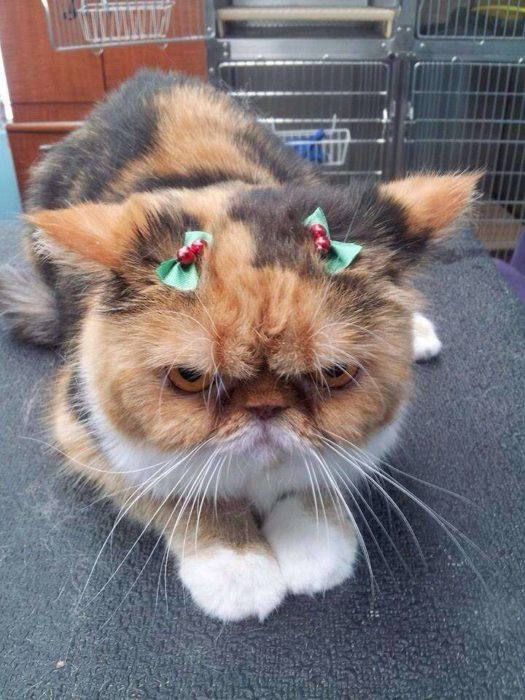 gato aborrece la navidad