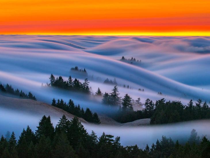 olas de niebla por encima de los árboles