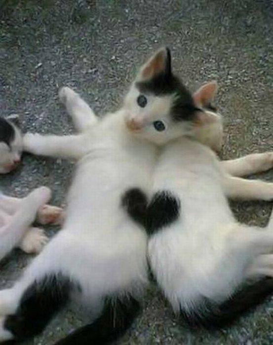 gatitos forman u corazón con sus espaldas