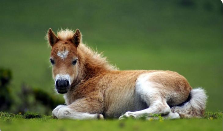 caballo con corazón en el pelaje