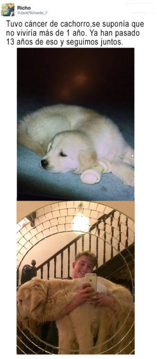 perrito de cachorro y de adulto