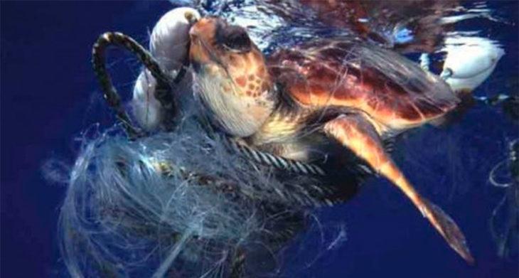 tortuga atrapada por la basura del mar