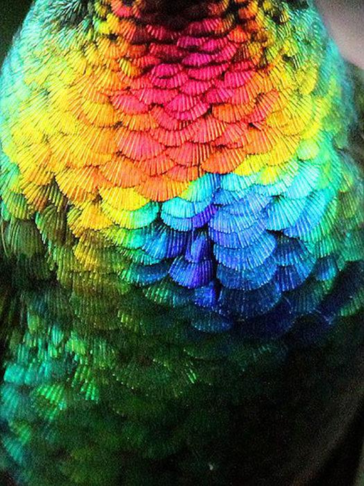 plumas de colibrí