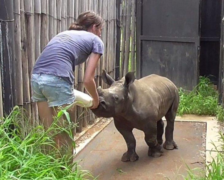rinoceronte bebé tomando leche