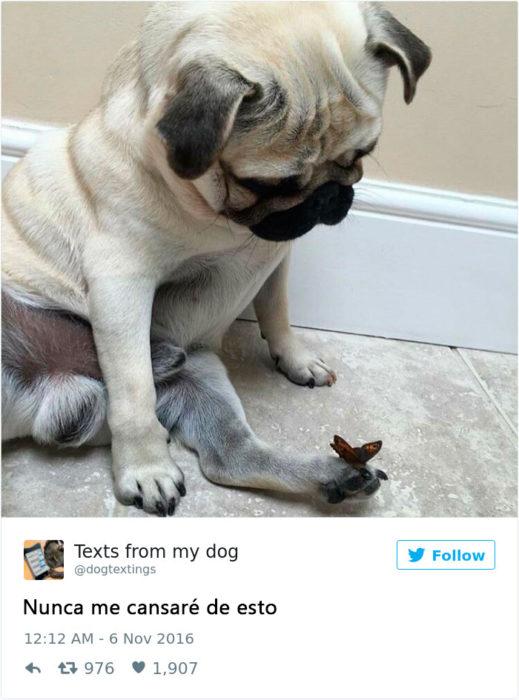 perrito observa una mariposa