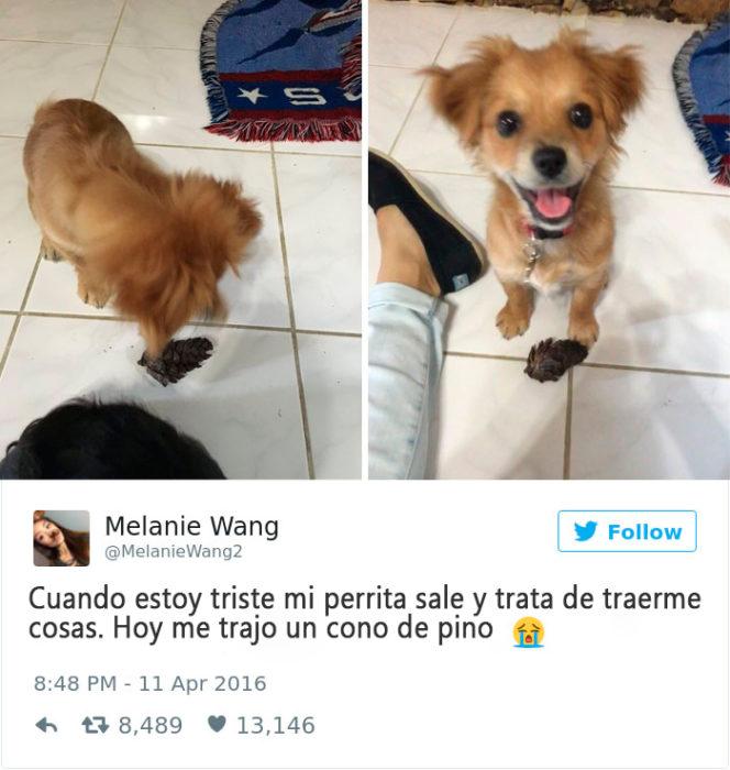 perrito que consuela a su dueña cuando está triste