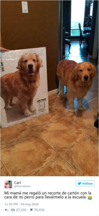 una foto tamaño real de un perro
