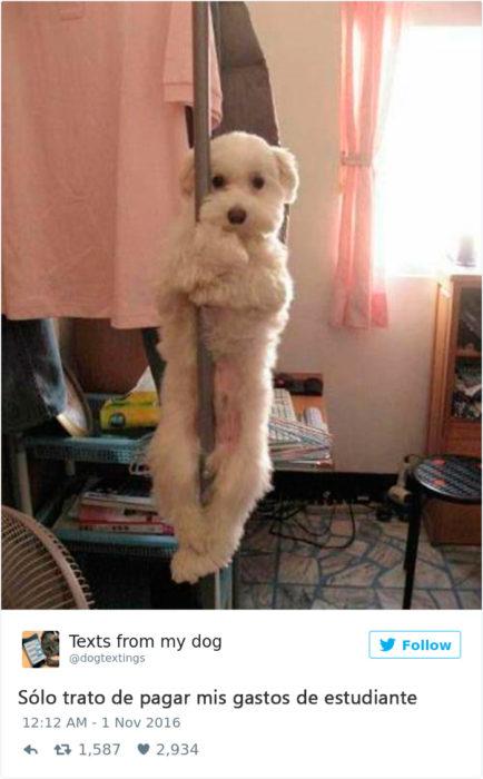 perrito en un table dance
