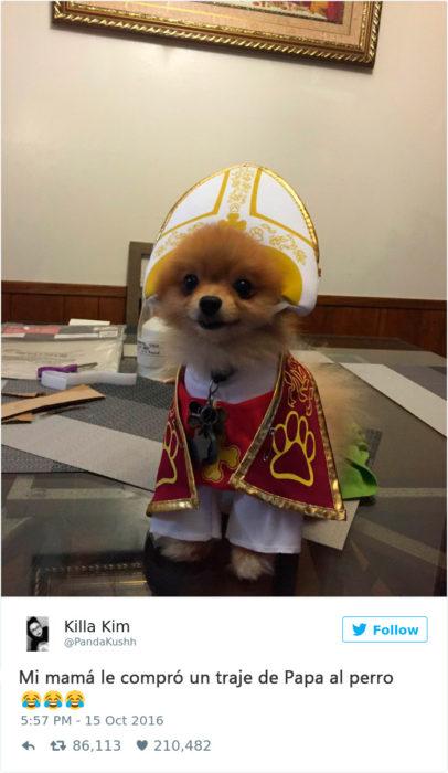 un perrito vestido de Papa