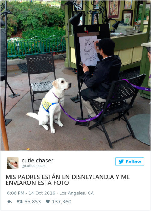 un perro en disneylandia