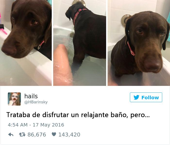 perro tomando un baño de tina