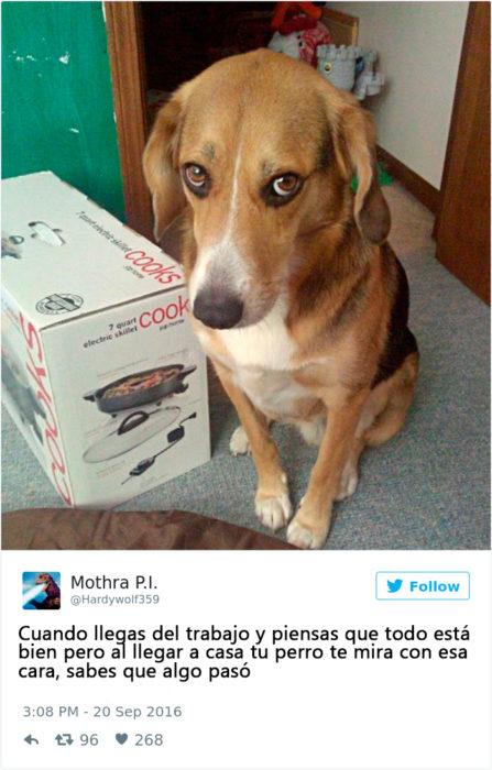 perro en problemas