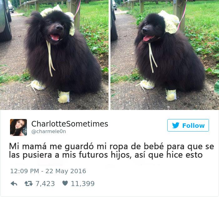 perro vestido como bebé