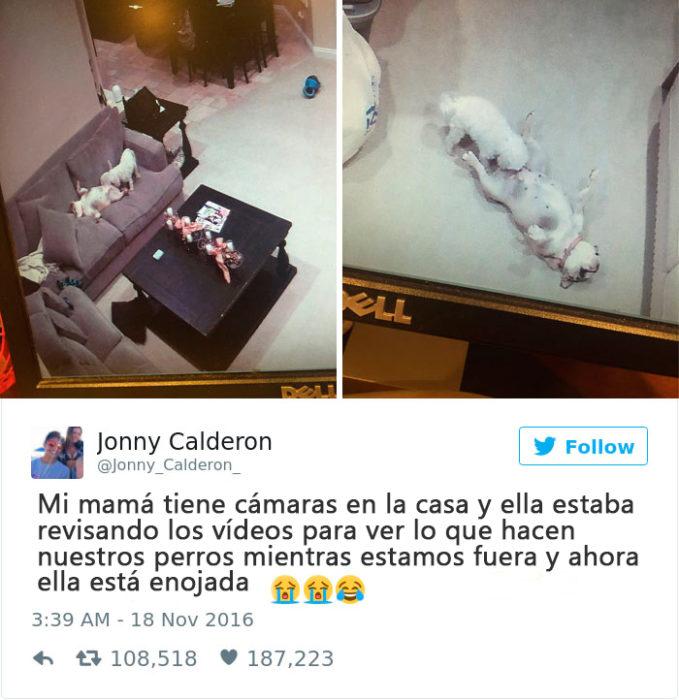 lo que hacen los perros cuando estás fuera de casa