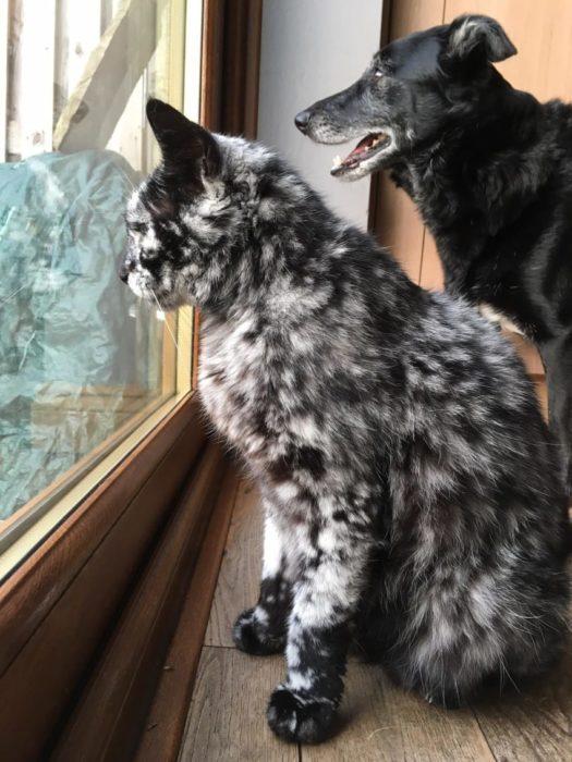 scrappy y su hermano