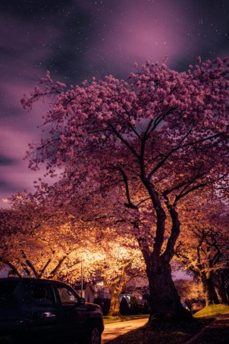 árbol de cerezo en la noche
