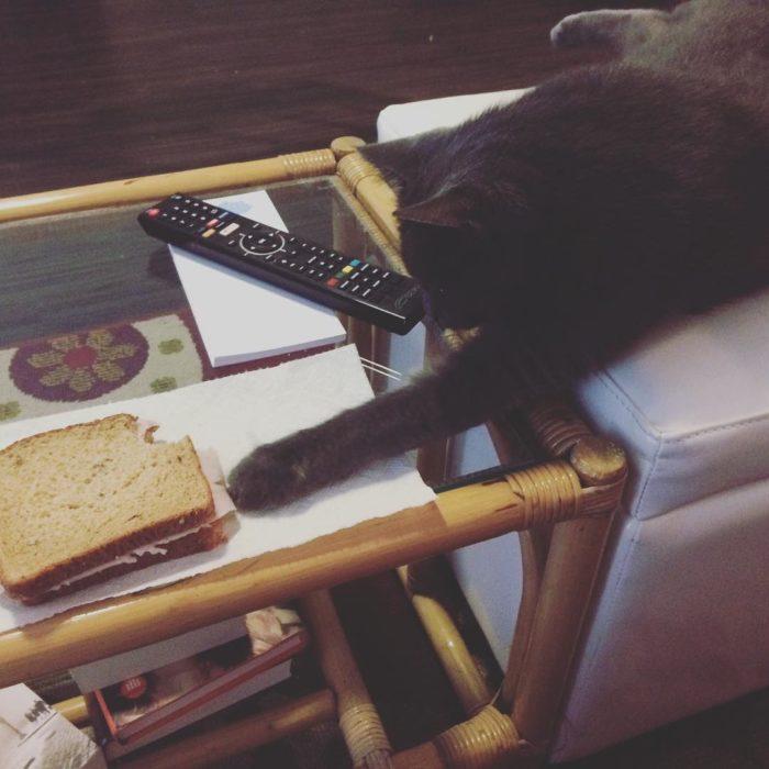 gato trata de robar un emparedado