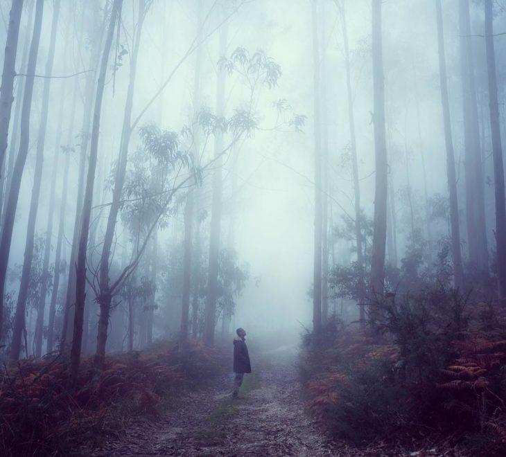 persona en medio de un gran bosque