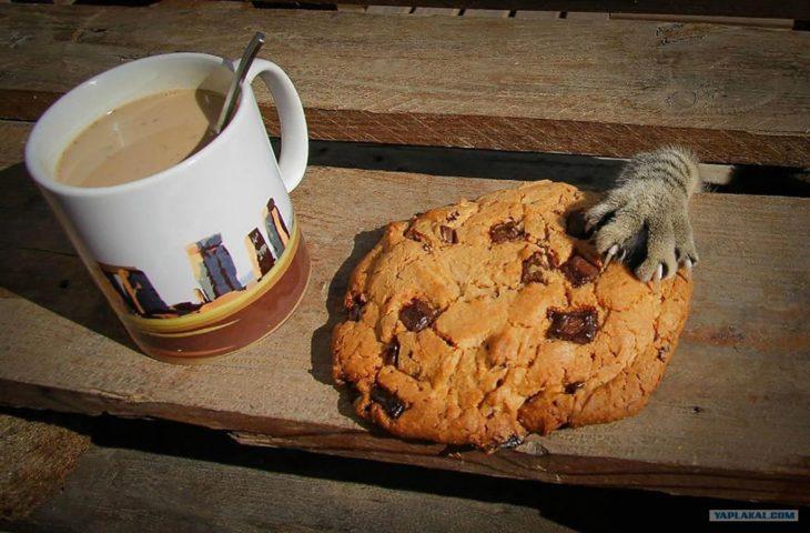 pata de gato robando galleta