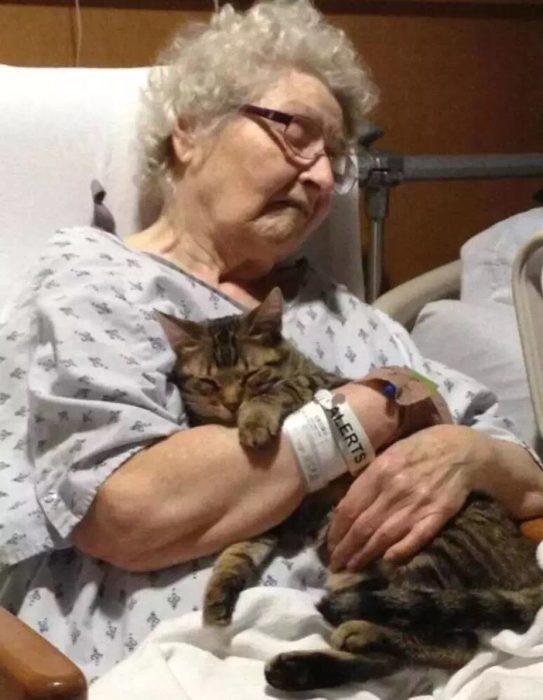 un gato junto a su dueña cuando está enferma