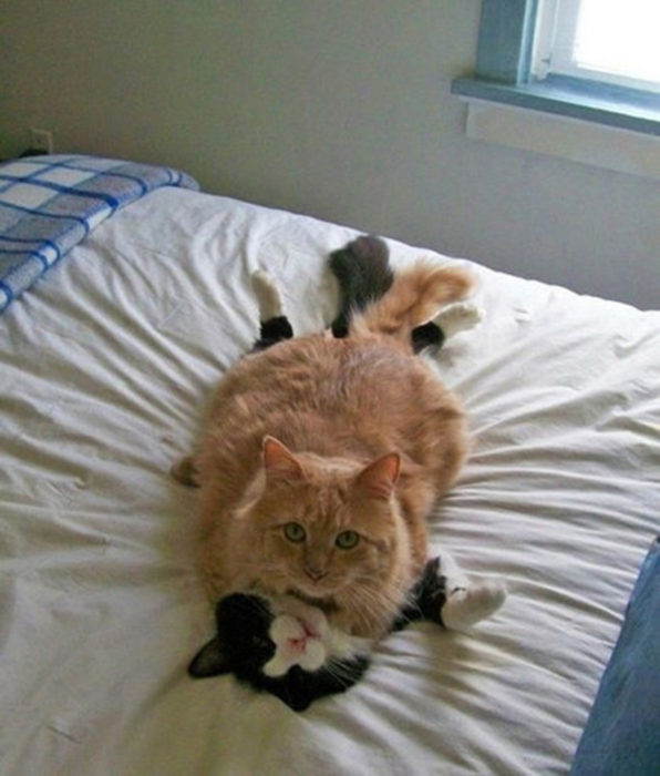 """dos gatos en el """"acto"""""""