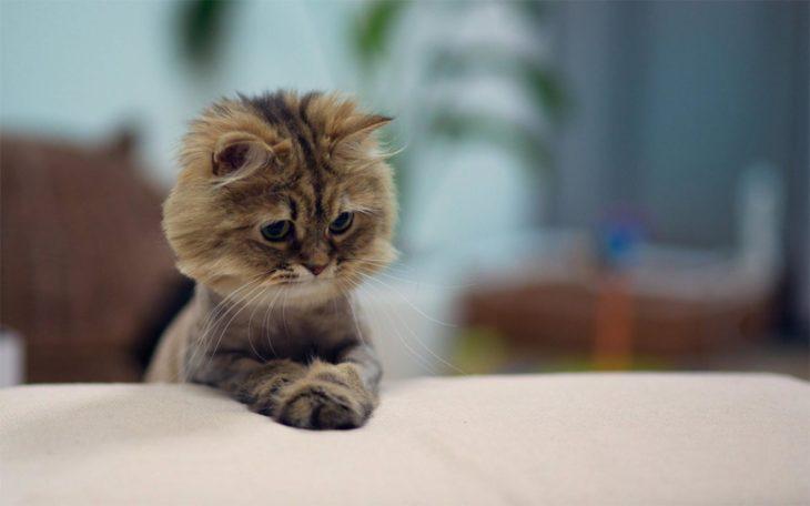 un gatito sumamente tierno y adorable