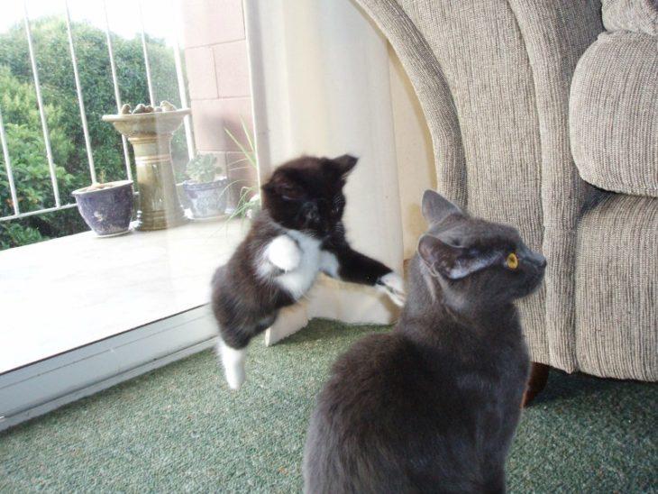 un gato pequeño atacando por sorpresa a otro gato