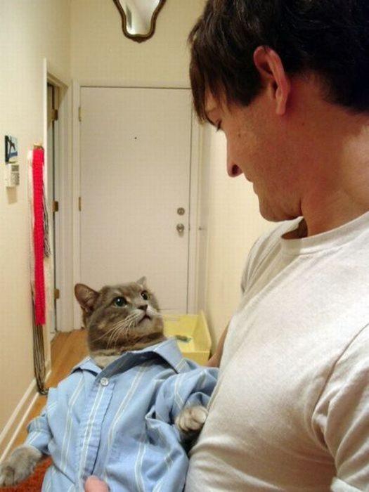 gato con cara de wtf