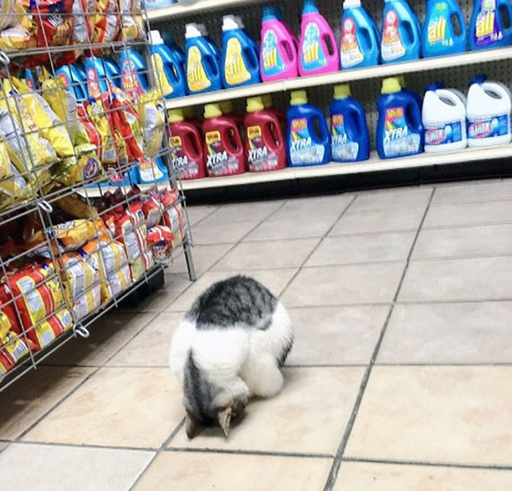 un gato haciendo yoga en el supermercado