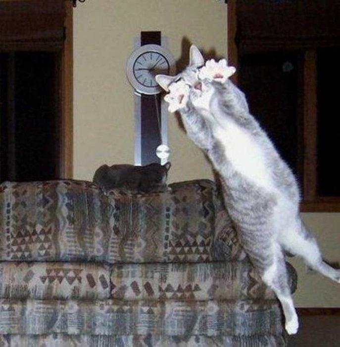 un gato tapando un disparo de penal