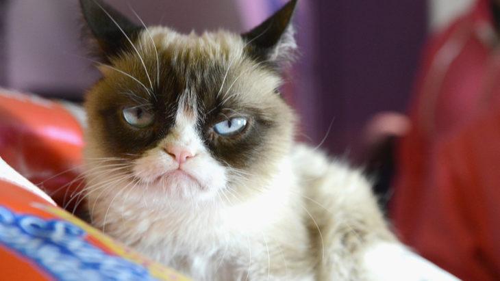 un gato con cara de molesto