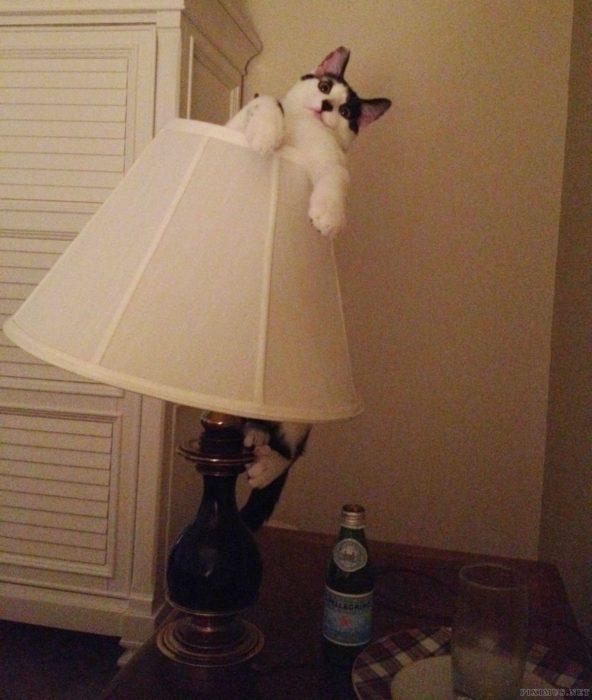 un gato usando una lámpara como falda