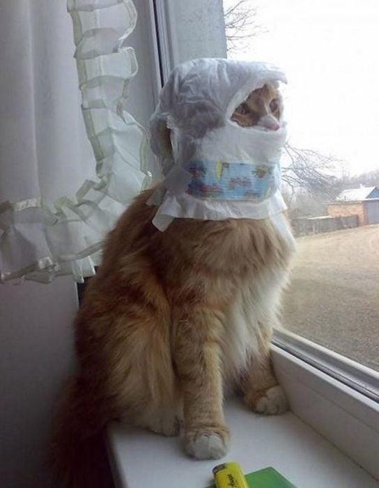 un gato con un pañal en la cabeza