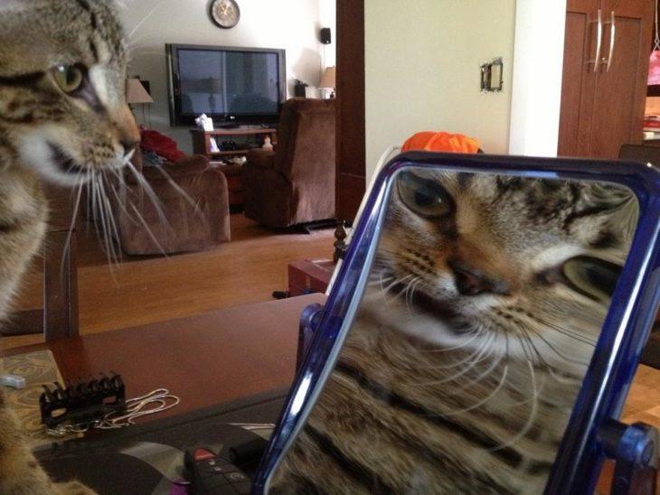 un gato mirándose frente al espejo