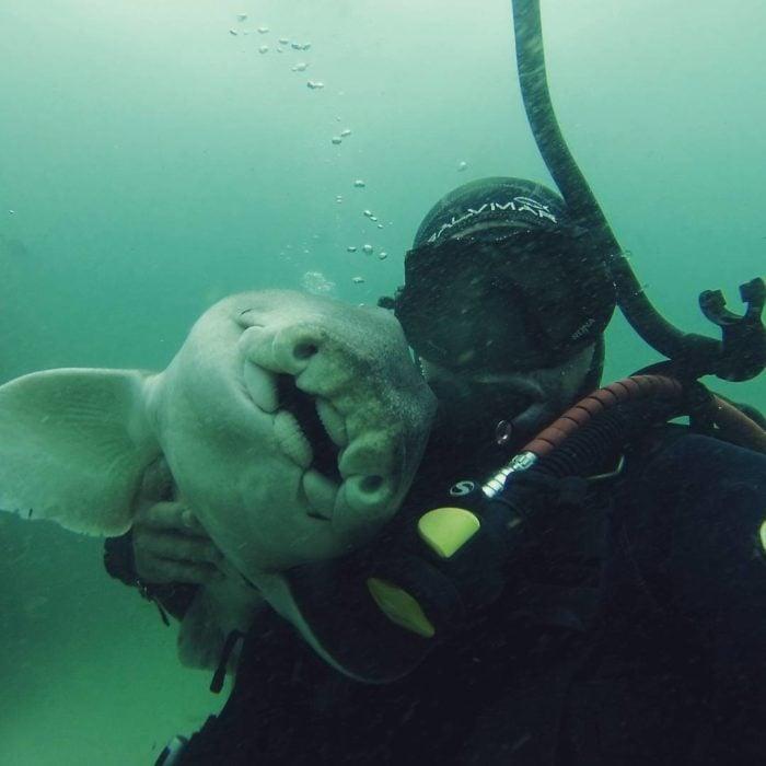 este buzo y una hembra de tiburón se hicieron los mejores amigos