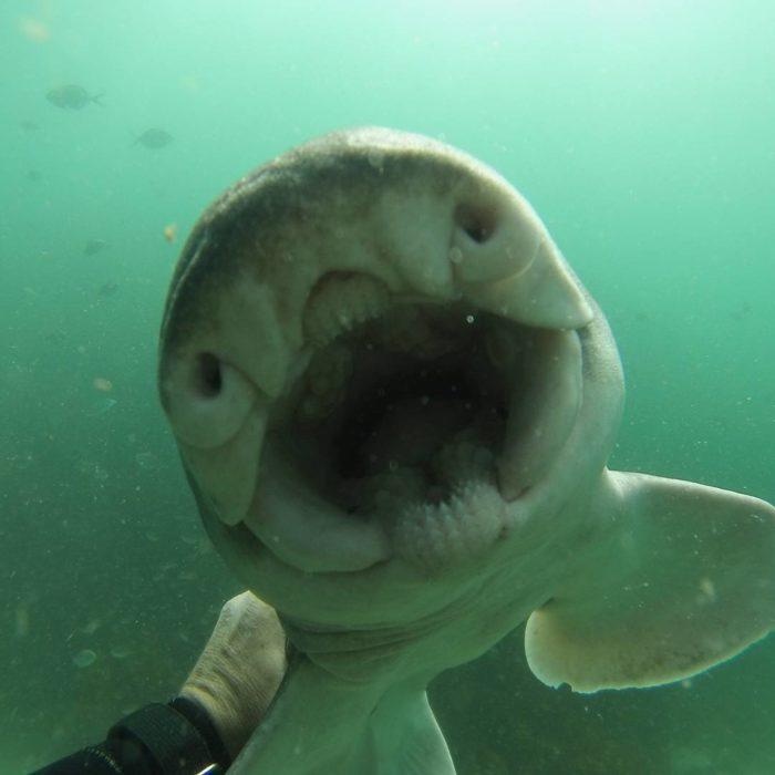tiburón hembra amiga de un buzo