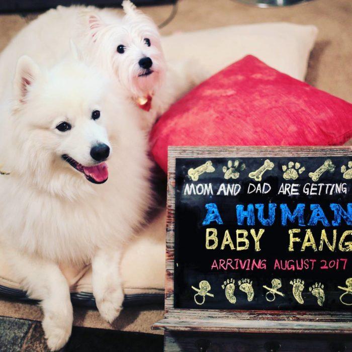 dos perros con pizarra que anuncia la llegada de un bbé