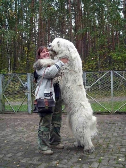 20 perros gigantes abrazo