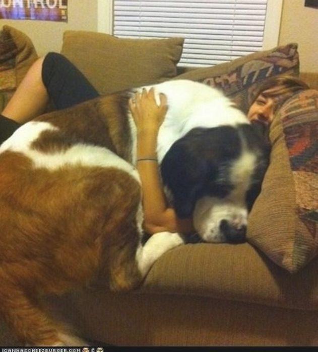 20 perros gigantes dueño del sofa