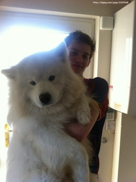 20 perros gigantes lobo