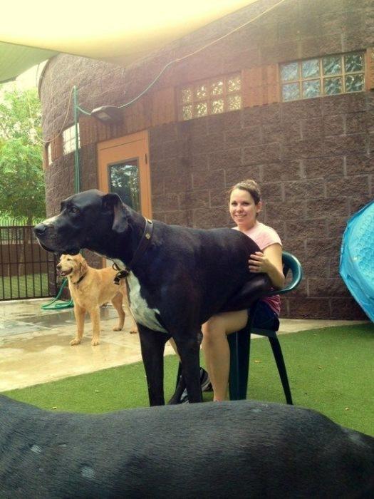 20 perros gigantes pero que tamaño