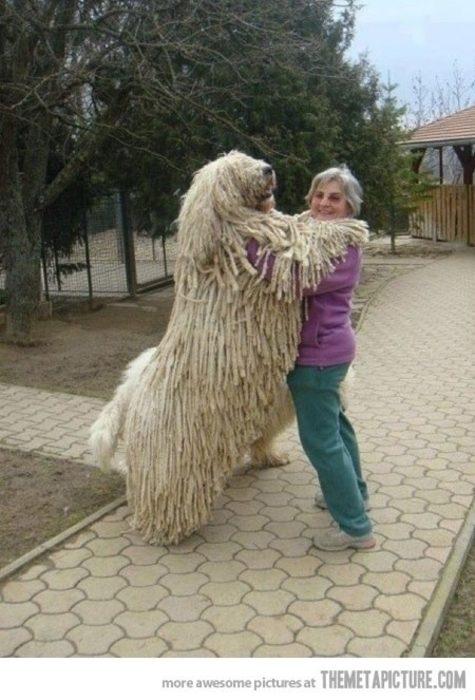 20 perros gigantes real perro lanudo