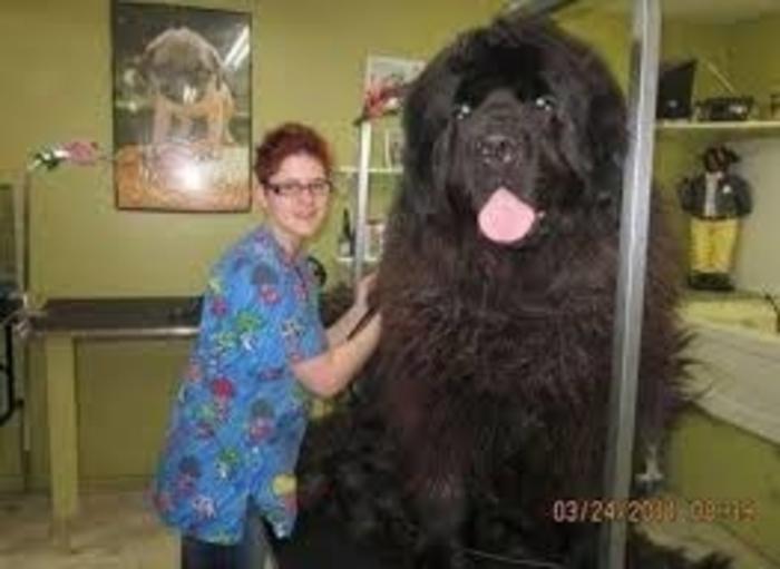 20 perros gigantes un baño