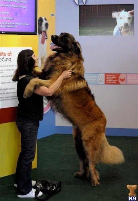 20 perros gigantes ver tv