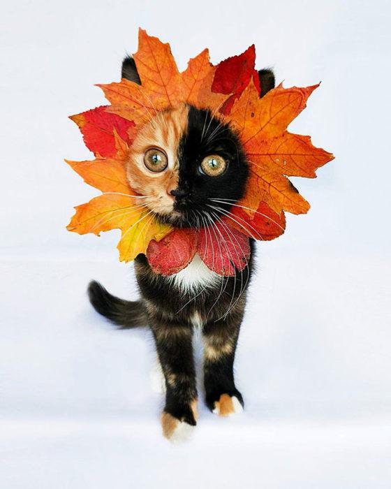 gato quimera con una hoja en la cara