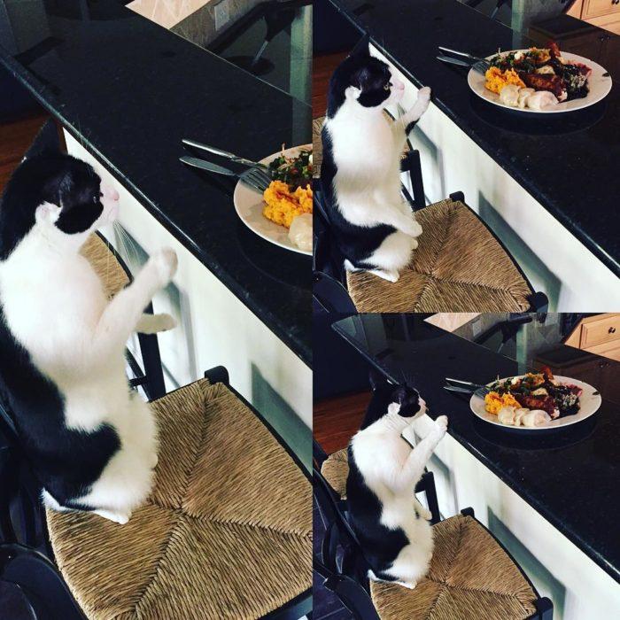 gato mirando un plato de comida