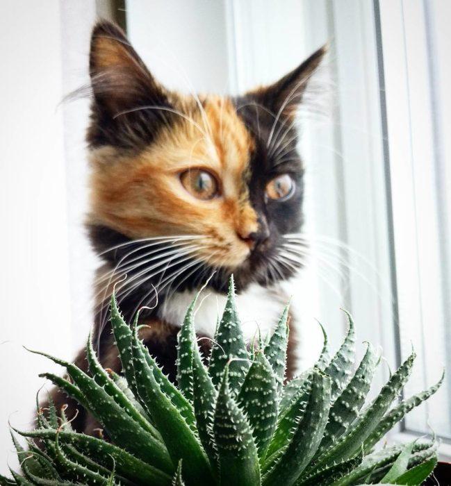 gata de dos colores detrás de una planta de aloe