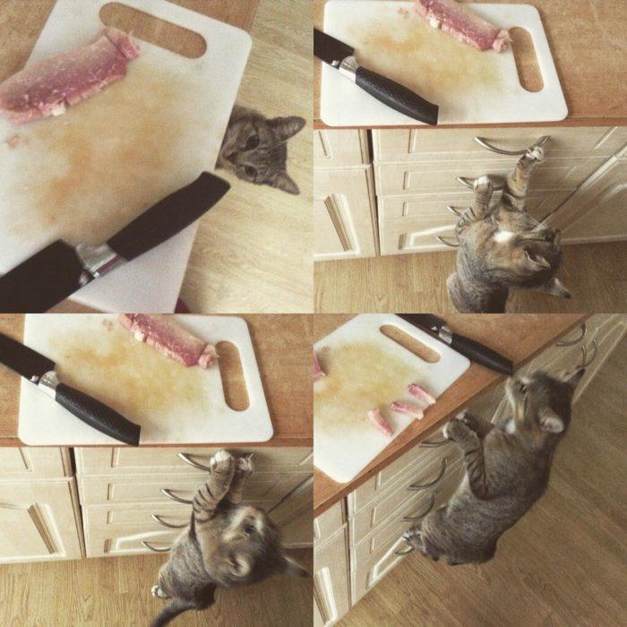 gato robando jamón